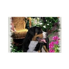 Greater Swiss Mountain Dog Rectangle Magnet (100 p