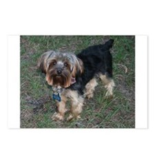 Romeo, the Yorkie Postcards (Package of 8)