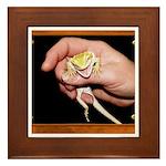Horned Toad Framed Tile