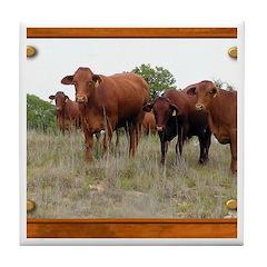 Cattle Tile Coaster