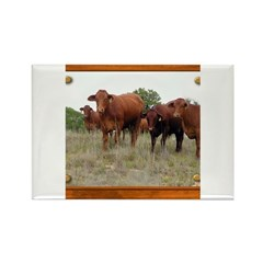 Cattle Rectangle Magnet