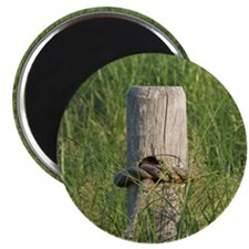 """Post on the Dune 2.25"""" Magnet (10 pack)"""