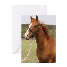 Champion racehorse Greeting Card