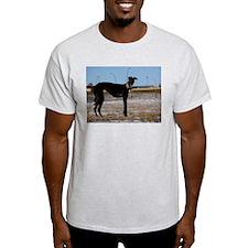 Black Greyhound Ash Grey T-Shirt