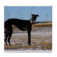 Black Greyhound Tile Coaster