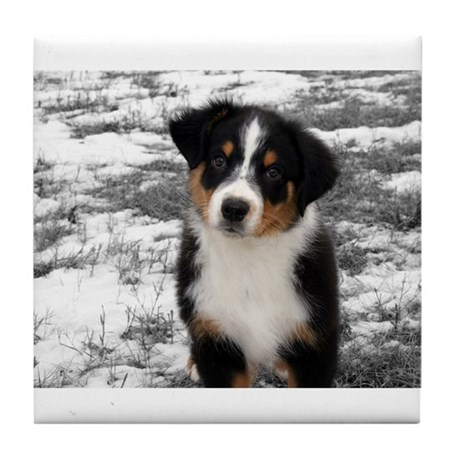 Colour Accented Baby Aussie Tile Coaster