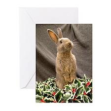 Christmas Bunny Greeting Cards (Pk of 10)