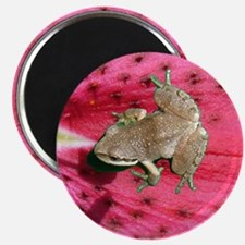 Pacific Tree Frog Magnet