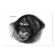 Chimpanzee Monkeys Postcards (Package of 8)