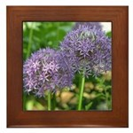 Allium Framed Tile