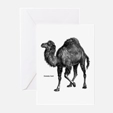 Camel Greeting Cards (Pk of 10)