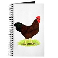 Rhode Island Red Rooster Journal