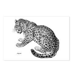 Jaguar Wild Cat Postcards (Package of 8)