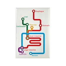 Gastrointestinal Subway Map Rectangle Magnet