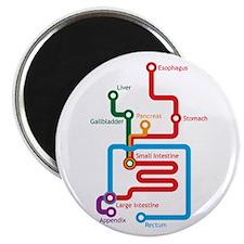 "Gastrointestinal Subway Map 2.25"" Magnet (100 pack"