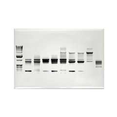DNA Gel B/W Rectangle Magnet