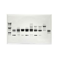 DNA Gel B/W Rectangle Magnet (10 pack)