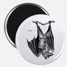 Fruit Bat Magnet