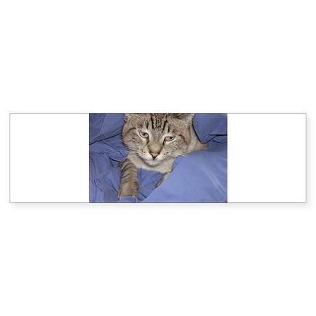 Buddha Cat Blues Bumper Sticker