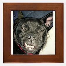 Pug Mug Framed Tile