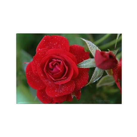 Red Roses Rectangle Magnet (100 pack)