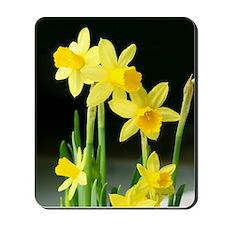 Sunny Daffodils Mousepad