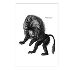 Hamadryas Baboon Postcards (Package of 8)