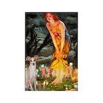 Midsummer's / Ital Greyhound Rectangle Magnet (10