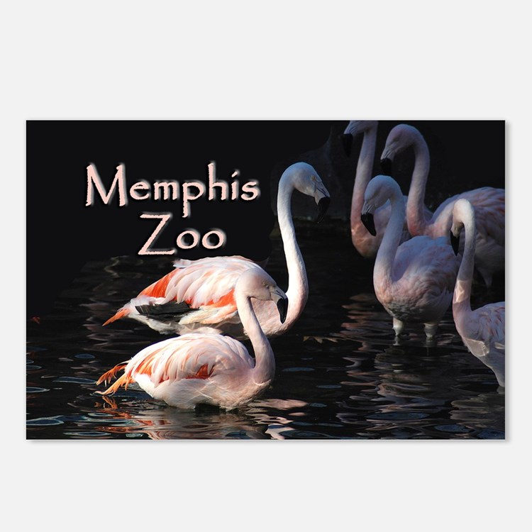 Memphis Zoo Postcards (Package of 8)