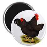 Rhode Island Red Pair Magnet