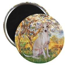 Spring / Italian Greyhound Magnet