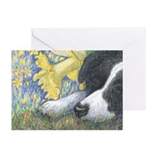 Daffodil dreaming Greeting Cards (Pk of 10)