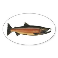 Coho Salmon Oval Decal