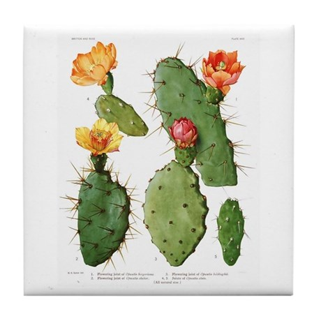 Blooming Cacti #1 Tile Coaster