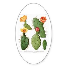 Blooming Cacti #1 Oval Decal
