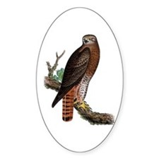 Red-tailed Hawk Oval Decal