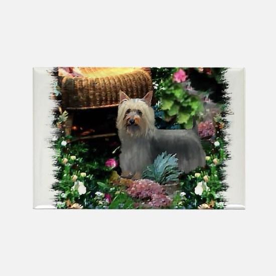 Silky Terrier Art Rectangle Magnet (10 pack)