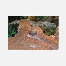 Bearded Dragon:Love Rectangle Magnet