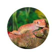 "Crested Gecko:Gaya 3.5"" Button"