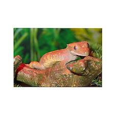 Crested Gecko:Gaya Rectangle Magnet