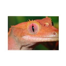 Crested Gecko:Gaya II Rectangle Magnet (10 pack)