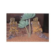 Leopard Gecko:Flick&Fleck Rectangle Magnet