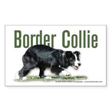 Creeping Border Collie Decal