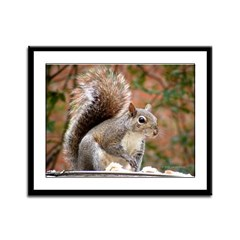 Squirrel Framed Panel Print
