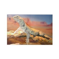 Mali Uromastyx:Inage Rectangle Magnet