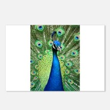 Unique Peacock Postcards (Package of 8)