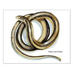 Glass Lizard Snake Small Poster