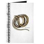 Glass Lizard Snake Journal
