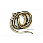 Glass Lizard Snake Postcards (Package of 8)