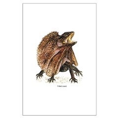 Frilled Lizard Posters